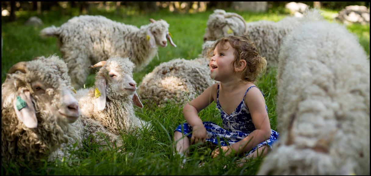 Notre ferme, Nos chèvres Angora